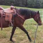3 Exercises Every Horse Needs to Know (Part 1): Lunging