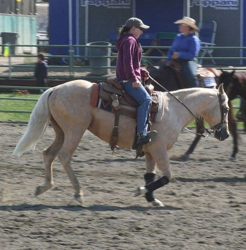 horse on the forehand