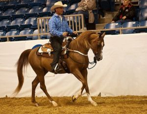 teaching your horse responsibility