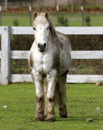 horse covered in mud