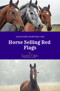 horse selling red flags pinterest cover photo