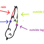 How do I ride inside leg to outside rein?